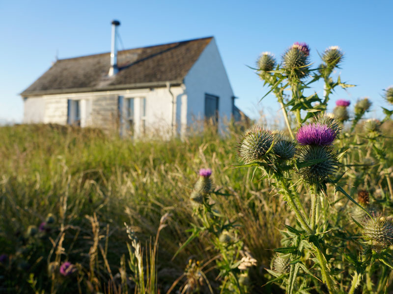 Bell's Bothy Bunkhouse and Scottish Thistle